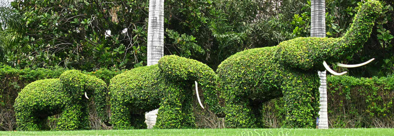 Topiary Art Lawn Services- Frederick Maryland